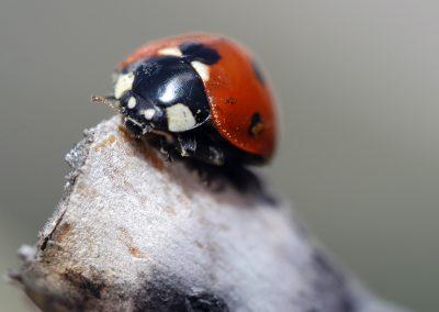 artistic-photography-by-jonnyjelinek_macro-ladybug