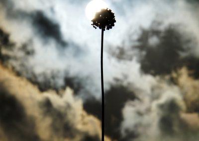 mindful-photography_by-jonnyjelinek_menorca-nature-plant-eclipse