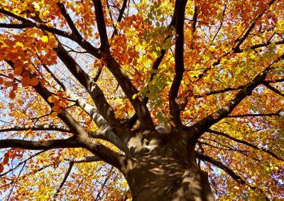 mindful-photography_by-jonnyjelinek_tree-of-fire_vienna