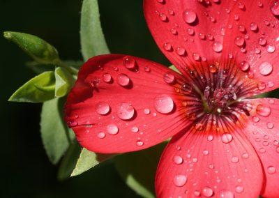 mindful-photography_by-jonnyjelinek_dropsonpinkflower