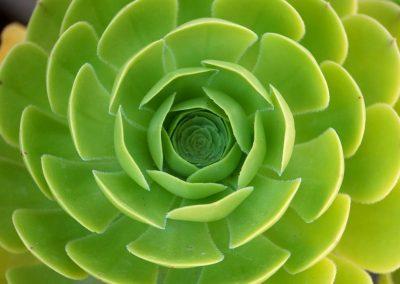 mindful-photography_by-jonnyjelinek_naturesperfectsymmetry