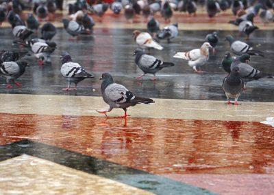 mindful-photography_by-jonnyjelinek_pigeonpatrol-barcelona