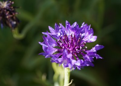 mindful-photography_by-jonnyjelinek_purple