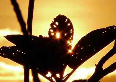 mindful-photography_by-jonnyjelinek_sunlightthroughtheleaves-seychelles
